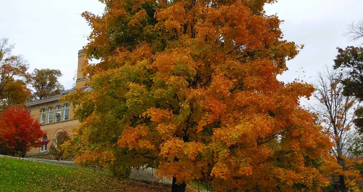 Prime color season on a nationally recognized Tree Campus